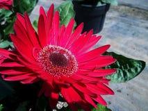 红色欢欣软的春天庭院 免版税库存图片