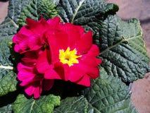 红色欢欣软的春天 免版税库存图片