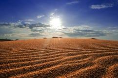 红色沙丘。 库存图片