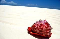 红色沙子海运壳白色 库存照片