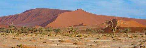 红色沙漠的沙丘 库存图片