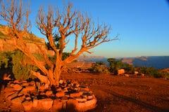 红色沙漠 库存照片