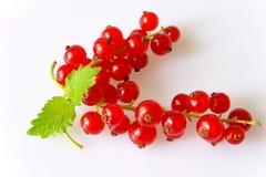 红色浆果的无核小葡萄干 免版税库存照片