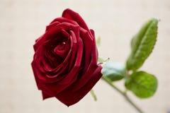 红色浪漫上升了 图库摄影