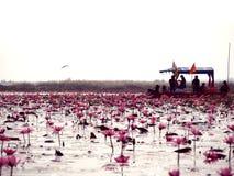 绯红色海在早晨泰国 库存图片