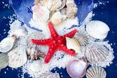 红色海星和其他软体动物 库存照片