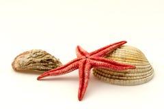红色海星和壳 免版税库存图片