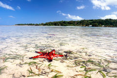 红色海星在热带海岛盐水湖 库存照片