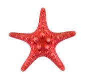 红色海星 免版税库存图片