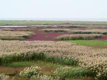 红色海滩 免版税图库摄影