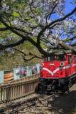 红色火车和樱桃树在全国风景是的阿里山开花 库存图片