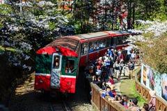 红色火车和樱桃树在全国风景是的阿里山开花 免版税库存照片