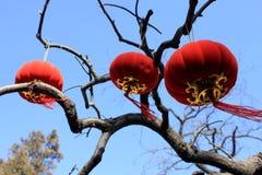 红色灯笼和桃红色垂悬在树的桃子开花 图库摄影