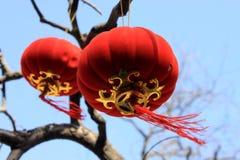 红色灯笼和桃红色垂悬在树的桃子开花 库存照片
