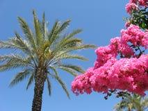 红色热带花、棕榈树和蓝天作为背景 免版税库存照片