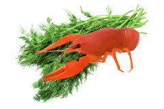 红色煮沸了在白色背景莳萝隔绝的束的小龙虾,开胃菜啤酒,中央位置 库存图片