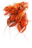 红色煮沸的小龙虾 免版税图库摄影