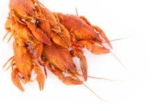 红色煮沸的小龙虾 免版税库存照片