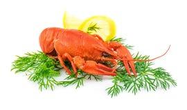 红色煮熟的龙虾用莳萝和柠檬 免版税库存照片