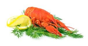 红色煮熟的龙虾 免版税库存照片