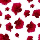 红色牡丹样式 免版税库存照片