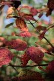 红色特写镜头离开与难看的东西纹理在被弄脏的绿色植物 免版税库存照片
