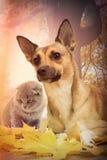 红色狗和小猫 免版税库存照片