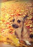 红色狗 免版税图库摄影