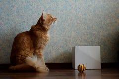 红色猫和他的玩具 免版税库存图片
