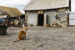 红色猫在一个牛围场在有老被毁坏的房子的一个村庄 库存照片