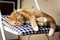 红色猫在一把椅子的一个蓝色枕头睡觉在阳光下 免版税库存照片