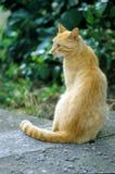 红色猫在公园 免版税图库摄影