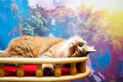 红色猫在家 库存图片