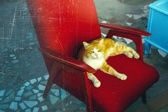 红色猫坐一把红色扶手椅子,被定调子和抓痕 宠爱概念 免版税库存图片