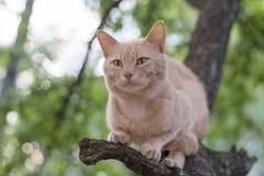 红色猫坐一棵树在春日 免版税库存图片