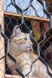 红色猫坐窗口和神色通过栅格 库存照片
