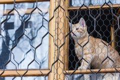 红色猫坐窗口和神色通过栅格 图库摄影