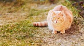 红色猫坐绿色春天草 库存照片
