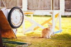 红色猫坐绿色春天草 库存图片