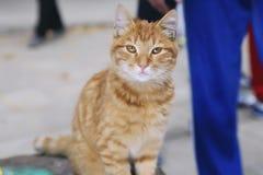 红色猫坐 免版税库存图片