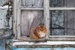红色猫看起来老窗口冬天 库存照片