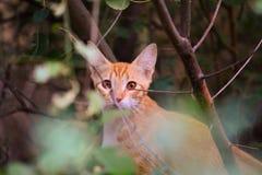 红色猫 免版税库存照片