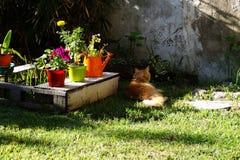 红色猫 库存照片