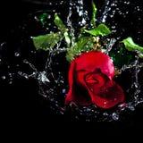 红色玫瑰下落水 免版税库存照片