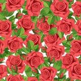 红色玫瑰传染媒介例证无缝的背景 图库摄影