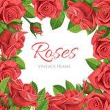 红色玫瑰传染媒介例证框架 库存图片