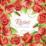 红色玫瑰传染媒介例证框架 图库摄影