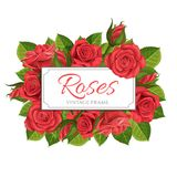 红色玫瑰传染媒介例证框架 免版税库存图片