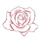 红色玫瑰传染媒介 库存图片