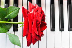 红色玫瑰和钢琴 库存照片